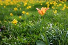 Flower, Plant, Wildflower, Vegetation Royalty Free Stock Photography