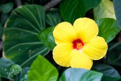Flower, Plant, Yellow, Flora royalty free stock photo