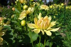 Flower, Plant, Yellow, Flora