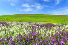 Flower plantation, green grass hill and bright blue sky Stock Photo