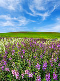 Flower plantation, green grass hill and bright blue sky Royalty Free Stock Photos