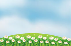 A flower plantation at the top of the hills Stock Images