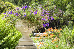 Flower Planter Stock Images