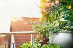 Flower Planter on balcony or terrace in sunset light. Urban container gardening. Flowers patio pot ideas stock images