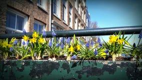 Flower planter outdoors, Amsterdam, Netherlands Stock Images