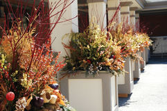 Flower Planters. Pretty flower planters with autumn colours royalty free stock photos