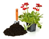 Flower planting Stock Photos