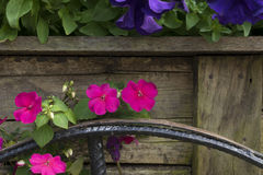 Flower planting on the cart. Old wooden cart with blooming flowers of summer Stock Photography