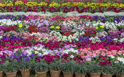 Flower plants arranged in design Royalty Free Stock Photography