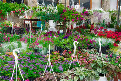 Flower plants market Royalty Free Stock Images