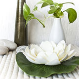 A flower and plants in a spa. A closeup of a flower and plants in a spa Royalty Free Stock Images