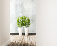 Flower plot in the room of interior decorate. 3d rendering royalty free illustration