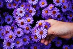 Flower plucking Royalty Free Stock Image