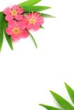 Flower of the plum and bamboo leaf Stock Image