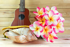 Flower plumeria or frangipani bunch in white cup with sea conch Royalty Free Stock Photo