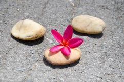 Flower plumeria or frangipani with stone on floor Stock Photos