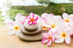 Flower plumeria or frangipani sweet decorated on  pebble rock in Stock Images