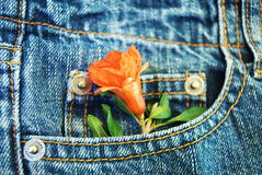 A flower in the pocket Stock Photos