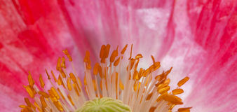 Flower with pollen Stock Photos