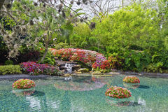 Flower pond Royalty Free Stock Photography