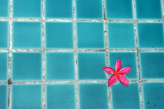 Flower in pool Royalty Free Stock Photography