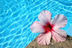 Flower by Pool Stock Photos