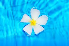 Flower in pool Royalty Free Stock Images