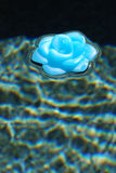 Flower in Pool Stock Photo