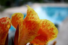 Flower by the pool stock images