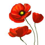 Flower poppies vector illustration  hand drawn Royalty Free Stock Photography