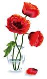 Flower_Poppy Stock Image