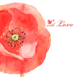 Flower poppy love bird Stock Image