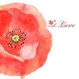 Flower poppy love bird. Very beautiful flower poppy love bird, beautiful  illustration Stock Image