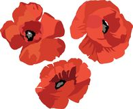 Flower Poppy set Royalty Free Stock Images