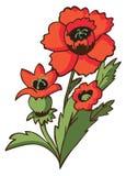Flower poppy on white Royalty Free Stock Image