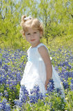 Flower Portrait Stock Images