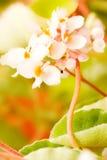 Flower postcard. Flawer image good for postcard; white flower bokeh Stock Photo