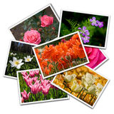 Flower postcards. Isolated on the white background royalty free stock photography