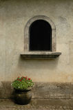 Flower Pot. And window Royalty Free Stock Photography