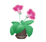 Flower in a pot Stock Photography
