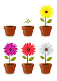 Flower pot. Isolated on white background Stock Photo