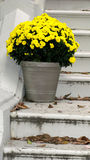 Flower pot. Yellow flower pot on step Royalty Free Stock Image