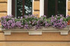 Flower pot Stock Photo
