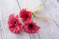 Flower pot. Three red gerberas rely more on the table stock images