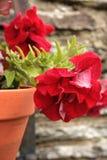 Flower pot. Flower in pot against brick wall Stock Photo