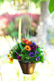 Flower pot. The hanging beautiful flower pot Stock Image