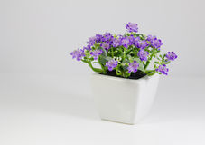 A flower pot Stock Image