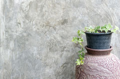 Flower pot against cement wall. Royalty Free Stock Image