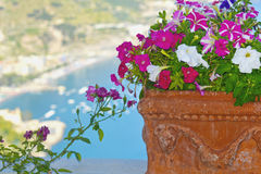 Flower pot and Amalfi coast view Royalty Free Stock Images