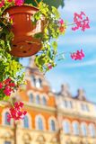 Flower in a pot on the background of the house, a beautiful card stock image